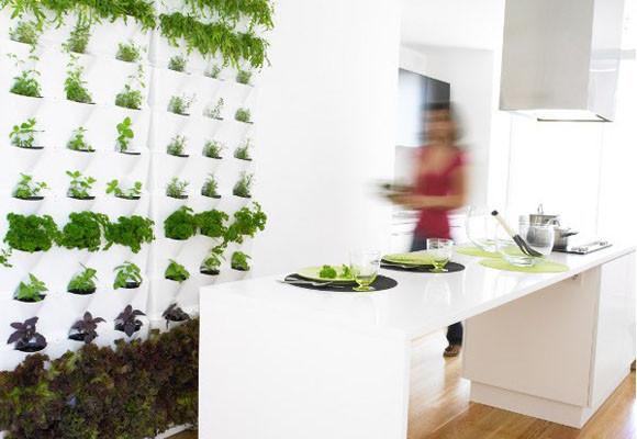 Немного природы в доме – вертикальное озеленение в интерьере